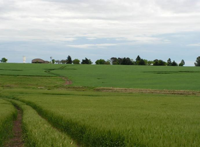 Investments projects in the agricultural sector in Uruguay .