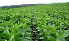 Uruguayan farmland selling prices down 20 to 30%